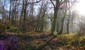 Trail Walk RETHEUIL - en forêt de Retz_76_dans les forêts de Retz et de Compiègne - Photo 38
