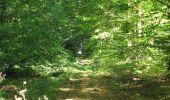 Trail Walk DAMPLEUX - en forêt de Retz_80_sur la Route Tortue et la Route Droite - Photo 166