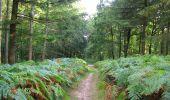 Randonnée A pied VILLERS-COTTERETS - le GR11A  dans la Forêt de Retz  - Photo 116