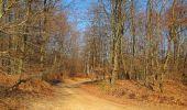 Trail Walk PIERREFONDS - en forêt de Compiègne_24_Tournantes sur le Voliard et sur la Fortelle_chaussée Brunehaut - Photo 129