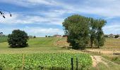 Randonnée Marche Yvoir - Durnal / 2020-07-19 - Photo 3