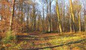 Trail Walk SAINT-JEAN-AUX-BOIS - en forêt de Compiègne_33_12_2019_les Tournantes de l'étang Saint-Jean et des Prés Saint-Jean - Photo 66