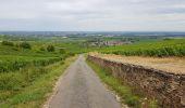 Trail Walk MONTHELIE - De Monthelie à Pommard - Photo 6