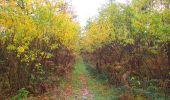 Randonnée Marche SAINT-JEAN-AUX-BOIS - en forêt de Compiègne_32_11_2019_les Tournantes de la Muette et sous la Tête Saint-Jean - Photo 100