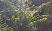 Randonnée Marche LOCMELAR - ballade 270719 - Photo 32