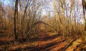 Trail On foot VIEUX-MOULIN - en forêt de Compiègne_23_la Grotte des Ramoneurs_le Mont Berny - Photo 93