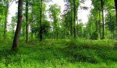 Randonnée Marche COYOLLES - en forêt de Retz_78_les rayons du Rond Capitaine - Photo 62