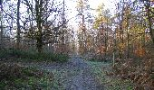 Trail Walk SAINT-JEAN-AUX-BOIS - en forêt de Compiègne_33_12_2019_les Tournantes de l'étang Saint-Jean et des Prés Saint-Jean - Photo 172