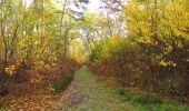 Randonnée Marche SAINT-JEAN-AUX-BOIS - en forêt de Compiègne_32_11_2019_les Tournantes de la Muette et sous la Tête Saint-Jean - Photo 101