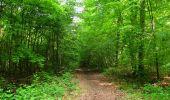 Randonnée Marche COYOLLES - en forêt de Retz_78_les rayons du Rond Capitaine - Photo 13