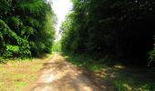 Randonnée Marche COYOLLES - en forêt de Retz_78_les rayons du Rond Capitaine - Photo 98