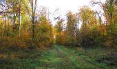 Randonnée Marche SAINT-JEAN-AUX-BOIS - en forêt de Compiègne_32_11_2019_les Tournantes de la Muette et sous la Tête Saint-Jean - Photo 119