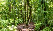 Randonnée Marche Maison de la Forêt - Trace du bras David - Photo 4