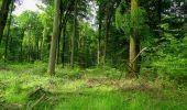 Randonnée Marche COYOLLES - en forêt de Retz_78_les rayons du Rond Capitaine - Photo 63