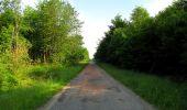 Randonnée Marche COYOLLES - en forêt de Retz_78_les rayons du Rond Capitaine - Photo 122