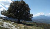 Randonnée Marche CAMPILE - Boucle de Monte Castellare - Photo 7
