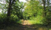 Randonnée Marche LACROIX-SAINT-OUEN - en forêt de Compiègne_35_la Croix Saint-Sauveur_le Ru du Goderu - Photo 61