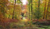 Randonnée Marche SAINT-JEAN-AUX-BOIS - en forêt de Compiègne_32_11_2019_les Tournantes de la Muette et sous la Tête Saint-Jean - Photo 147