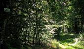 Trail Walk DAMPLEUX - en forêt de Retz_80_sur la Route Tortue et la Route Droite - Photo 213
