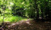 Randonnée Marche HARAMONT - en forêt de Retz_79_08_2019_vers Taillefontaine et Retheuil par les lisières - Photo 96