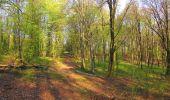 Randonnée A pied VILLERS-COTTERETS - le GR11A  dans la Forêt de Retz  - Photo 101
