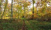 Randonnée Marche SAINT-JEAN-AUX-BOIS - en forêt de Compiègne_32_11_2019_les Tournantes de la Muette et sous la Tête Saint-Jean - Photo 121