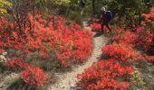 Trail Walk CHATEAUNEUF-DE-CHABRE - Gorges de la Méouge retour par côte chaude - Photo 4