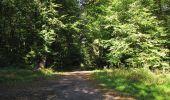 Trail Walk RETHEUIL - en forêt de Retz_76_dans les forêts de Retz et de Compiègne - Photo 76