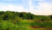 Trail Walk COYOLLES - en forêt de Retz_78_les rayons du Rond Capitaine - Photo 70