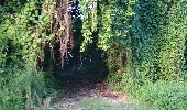 Trail Walk BASSE-POINTE - SALLE DES FÊTES-EYMA-TAPIS VERT-MOULIN L'ÉTANG en boucle - Photo 11