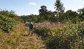 Trail Walk Havelange - De Havelange à Saint Fontaine par le village de Ossogne - Photo 2
