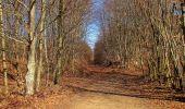 Trail Walk PIERREFONDS - en forêt de Compiègne_24_Tournantes sur le Voliard et sur la Fortelle_chaussée Brunehaut - Photo 128