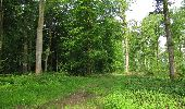 Randonnée Marche COYOLLES - en forêt de Retz_78_les rayons du Rond Capitaine - Photo 60