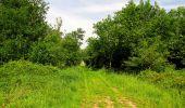 Randonnée Marche COYOLLES - en forêt de Retz_78_les rayons du Rond Capitaine - Photo 36