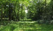 Randonnée Marche LACROIX-SAINT-OUEN - en forêt de Compiègne_35_la Croix Saint-Sauveur_le Ru du Goderu - Photo 104