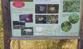 Randonnée Marche Tellin - repérage zero carbone 16092020 - Photo 30