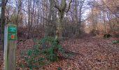 Trail Walk PIERREFONDS - en forêt de Compiègne_24_Tournantes sur le Voliard et sur la Fortelle_chaussée Brunehaut - Photo 99