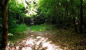 Randonnée Marche SAINT-JEAN-AUX-BOIS - en forêt de Compiègne_6_les Grands Monts_la route tournante sur la tête St-Jean - Photo 141