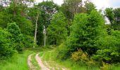 Randonnée Marche COYOLLES - en forêt de Retz_78_les rayons du Rond Capitaine - Photo 128