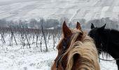Trail Horseback riding ROSENWILLER - 2019-01-20 Balade dans la neige - Photo 1
