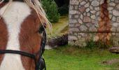 Trail Horseback riding AUBURE - 2019-11-02 WE Aubure Brezouard - Photo 2