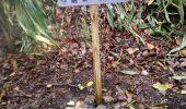 Trail Walk LE LORRAIN - Maison pour Tous SÉGUINEAU - FOND D'OR - Photo 2