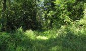 Randonnée Marche LACROIX-SAINT-OUEN - en forêt de Compiègne_35_la Croix Saint-Sauveur_le Ru du Goderu - Photo 2