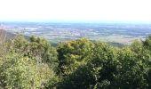Trail Walk KINTZHEIM - Haut koenigsbourg Final - Photo 7
