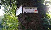 Randonnée Marche SENTHEIM - Bucherg - Photo 18