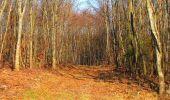 Trail Walk PIERREFONDS - en forêt de Compiègne_24_Tournantes sur le Voliard et sur la Fortelle_chaussée Brunehaut - Photo 12