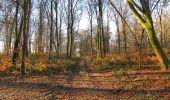 Trail Walk SAINT-JEAN-AUX-BOIS - en forêt de Compiègne_33_12_2019_les Tournantes de l'étang Saint-Jean et des Prés Saint-Jean - Photo 101