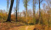 Randonnée A pied VILLERS-COTTERETS - le GR11A  dans la Forêt de Retz  - Photo 70