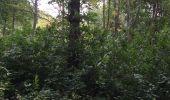 Randonnée Chasse Tancarville - Tancarville  - Photo 20