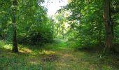 Trail Walk DAMPLEUX - en forêt de Retz_80_sur la Route Tortue et la Route Droite - Photo 207
